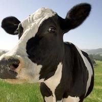 Patrick Murphy: Brazilian beef deal with EU has serious implications for Irish farming
