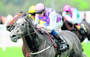 Kingfisher to strike Gold for trainer Aidan O'Brien