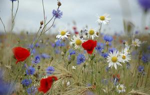 The Casuel Gardener: Blooming Irish meadows
