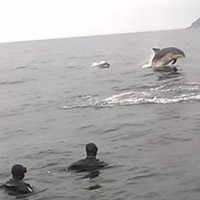 Dolphin pod puts on summer show at Malin Head