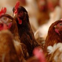 Vigilance urged after avian flu outbreak in England