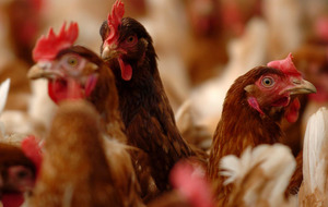 Vigilence urged after Lancashire bird flu case confirmed