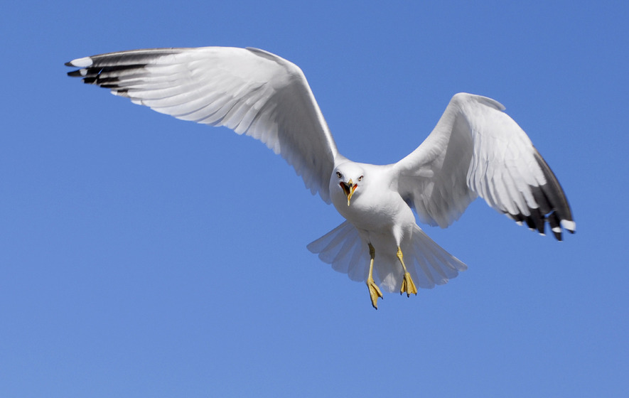 David Cameron demands 'big conversation' about killer seagulls