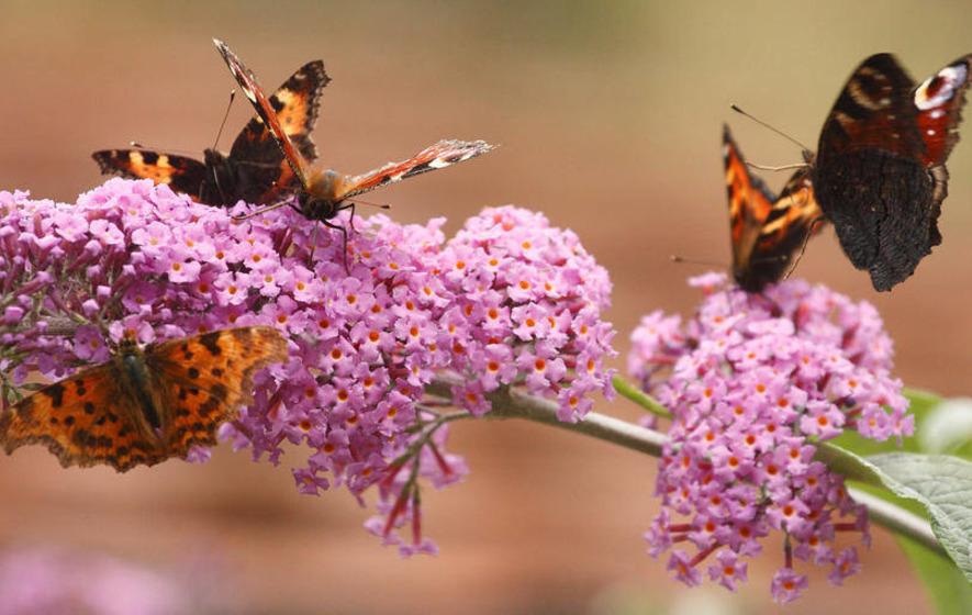 Green Briefs: Help reverse butterfly decline