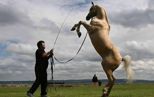 Assembly out of time to ban circus animals
