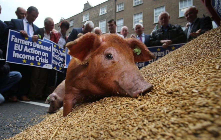 Farmers milk cow on Dublin street in protest over incomes