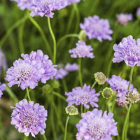 The Casual Gardener: Harvest nature's floral bounty