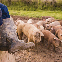 Future of pig industry 'in doubt' UFU claims