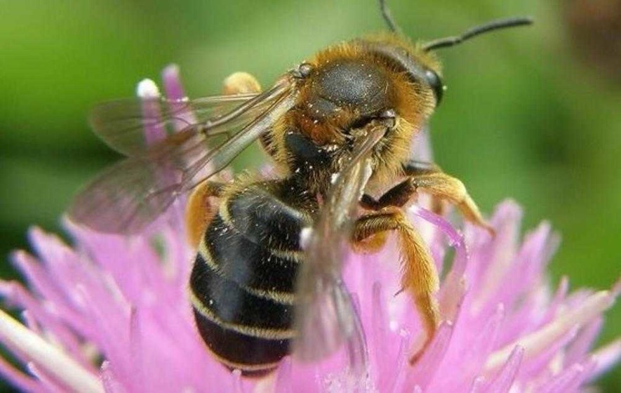 Ireland hopes to provide a haven for bees