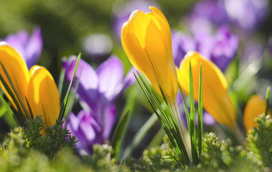 Thinking Ahead With Spring Flowering Bulbs The Irish News