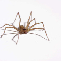 Bite to reply: Speaking out on behalf of spiders