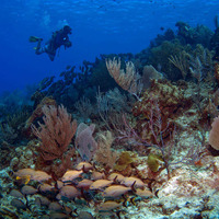 Caymans diving offers passport to a whole new world