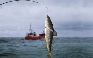 Widen your net to keep fish stocks sustainable