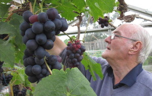 Good news from the grapevine – in Co Down