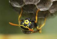 Man dies after wasp sting