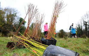 One million trees to take root across Ireland in just one day