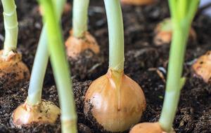 The Casual Gardener: Working over winter