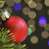Netting a Bargain: Buy a Christmas tree for a new-year treat