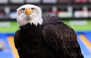 Crystal Palace football fan allegedly tried to punch club's bald eagle mascot