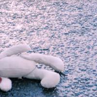Ballymena Bear is Christmas internet sensation