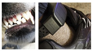 Alleged burglar claims dog chewed off his electronic tag