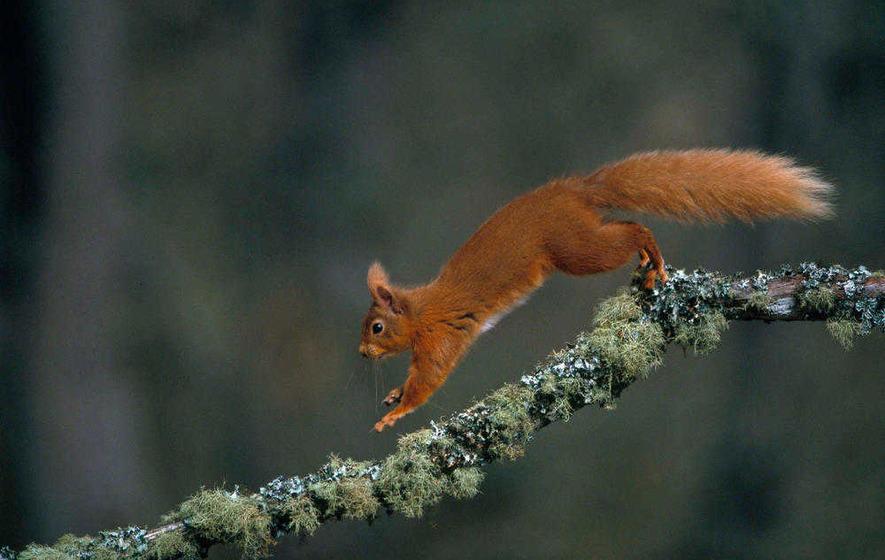 Calls for rope bridges to save Limerick squirrels