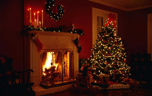 The Casual Gardener: Top Christmas tree tips