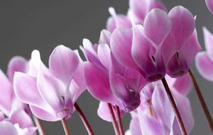 The Casual Gardener: Winter houseplants