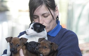 Animal sanctuary that's full to capacity braces itself for 'unwanted' Christmas pets